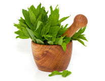 Peppermint in a wooden mortar Royalty Free Stock Image