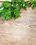 peppermint on wooden table Stock Photos