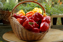 Peppers. Fresh peppers in a basket Stock Image