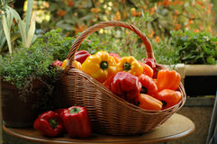 Peppers. Fresh peppers in a basket Royalty Free Stock Photography