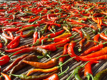 Peppers. Detailed view of green and red peppers in the countryside of china Stock Images