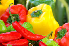Peppers. Lots of colorful peppers composition Royalty Free Stock Photography