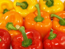 Peppers. Red,orange and yellow peppers in rows royalty free stock images
