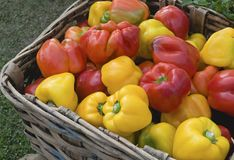 Peppers in basket Royalty Free Stock Images