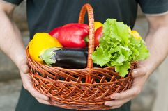 Peppers in basket in hands. Harvest Royalty Free Stock Image