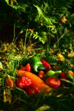 Peppers. Beautiful multicolored peppers, green grass, contrast, autumn, health, they give vitamins in the background of fern leaves, yellow leaves, beauty Stock Photo