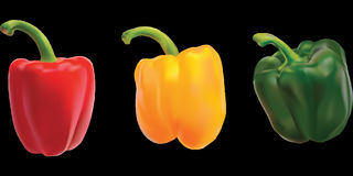 Peppers, Bell Pepper, Sweet Pepper Royalty Free Stock Images