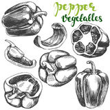 Peppers bell vegetable set hand drawn vector illustration realistic sketch. Peppers bell vegetable set hand drawn vector illustration sketch Royalty Free Stock Image