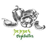 Peppers bell vegetable set hand drawn vector illustration realistic sketch. Peppers bell vegetable set hand drawn vector illustration sketch Royalty Free Stock Photography