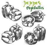 Peppers bell vegetable set hand drawn vector illustration realistic sketch. Peppers bell vegetable set hand drawn vector illustration sketch Royalty Free Stock Images