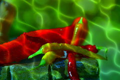 Peppers. Colorful peppers on a background of water colors red orange yellow green food spicy Royalty Free Stock Photo