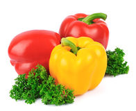 Peppers and curly parsley Stock Images