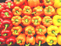 Peppers of different colors Royalty Free Stock Photo