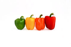 Peppers in four colors. Red, yellow, green, orange Stock Photos