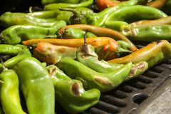 Peppers. Grilled summer garden harvest of hatch valley chili peppers, cowhorn peppers, bell peppers, serrano peppers and cayenne peppers Royalty Free Stock Image