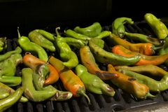 Peppers. Grilled summer garden harvest of hatch valley chili peppers, cowhorn peppers, bell peppers, serrano peppers and cayenne peppers on the barbecue Royalty Free Stock Photo