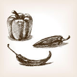 Peppers hand drawn sketch style vector Royalty Free Stock Photography