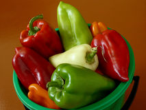Peppers harvest Royalty Free Stock Photos