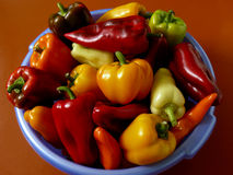 Peppers harvest Stock Image