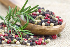 Peppers mix and rosemary Royalty Free Stock Photography