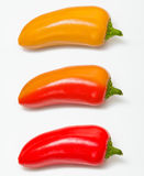 Peppers in orange and red Royalty Free Stock Image