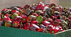 Peppers over the truck ready to be sold Stock Images