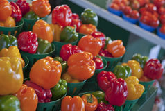 Peppers in Profusion. Brightly colored bell peppers on display in the Jean-Talon public market in Montreal, Quebec, Canada royalty free stock images