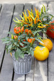 Peppers and pumpkins on wooden bench Stock Image