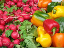 Peppers and radishes. Colourful peppers and radishes royalty free stock photography