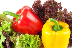 Peppers with salad Royalty Free Stock Photo