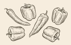 Free Peppers Set Sketch. Food Vintage Vector Illustration Stock Photos - 197083333