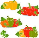 Peppers, set of yellow, red, green and orange peppers and parsley leaves,  illustration Stock Images