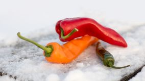 Peppers On Snow. Soft bokeh background. stock photography