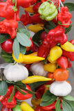 Peppers string Royalty Free Stock Image