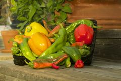 Peppers. Summer garden harvest of hatch valley chili peppers, cowhorn peppers, bell peppers, serrano peppers and cayenne peppers Stock Photography