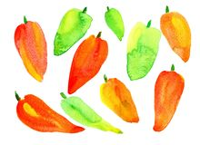 Peppers are sweet in different colors. Red, orange, green. Watercolor, on white background, isolated Stock Photography