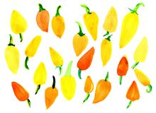 Peppers are sweet, yellow, orange. On a white background, isolated. Texture, background Royalty Free Stock Image