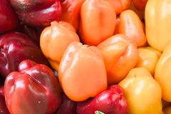 Peppers in three colors. Red,Orange and Yellow peppers Stock Photography