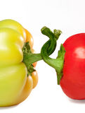 Peppers with twisted stems (symbol of friendship or competition) Royalty Free Stock Image