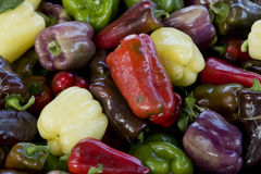 Peppers variety Stock Image