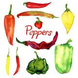 Peppers variety set,. Isolated hand painted watercolor illustration Stock Images