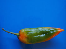 Peppers vegetable over blue with copy space Royalty Free Stock Image