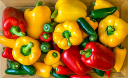 The Peppers. Vegetables; red, yellow, green peppers Stock Photo