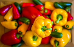 The Peppers. Vegetables; red, yellow, green peppers Stock Images