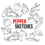 Peppers vegetarian food, vegetable handdrawn sketch. On white background. Different kinds of peppers, chili, jalapeno, cayenne, bell sweet. Engraved Stock Images