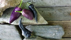 Peppers. Violet and black peppers on stones Royalty Free Stock Photography