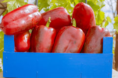 Peppers. Wooden box with red peppers Royalty Free Stock Photography