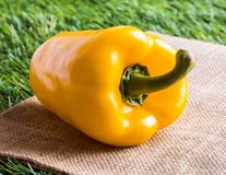LPeppers. Peppers - Yellow bell pepper on burlap hessian sacking with grass background. Pepper is vegetable that can be used to cooking. Close up Stock Image