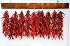 peppersdrying Calabrian的辣椒在阳光下 免版税库存图片