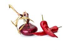 Peppra chili och lökar som isoleras på vit Royaltyfri Bild